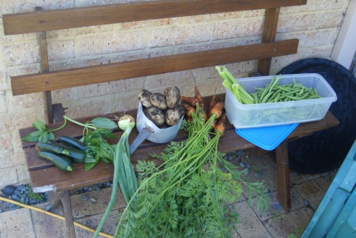 veggie-garden-nov-12-08